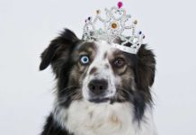 The Dog Breed Quiz