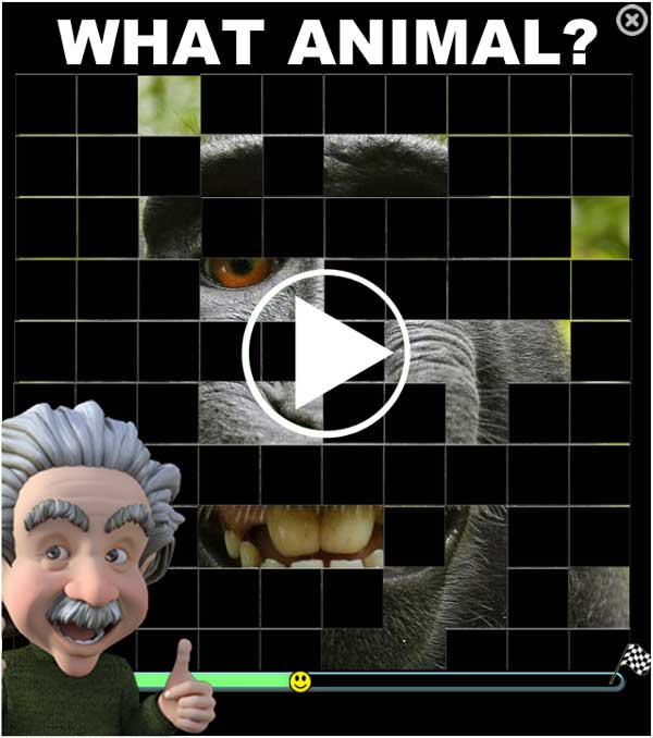 Animal Quiz: General knowledge trivia quizzes about animals.