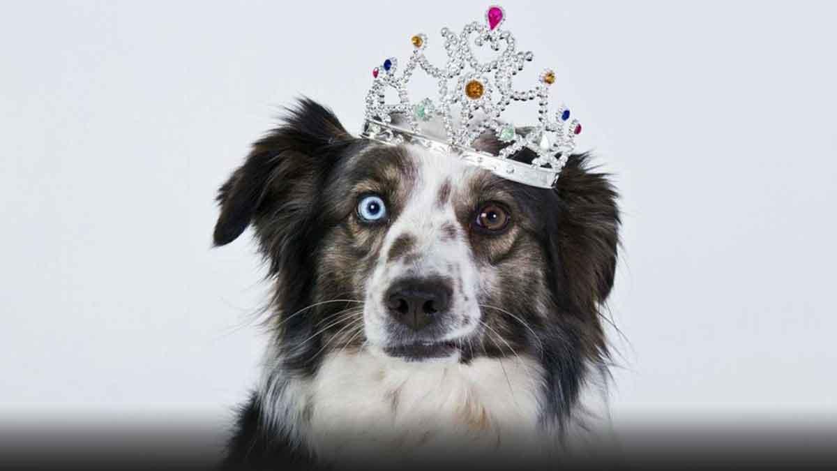 The Dog Breed Quiz